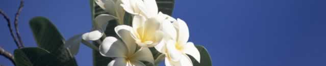 催眠療法を賢く学べる夏のキャンペーン実施中!(7/27まで)